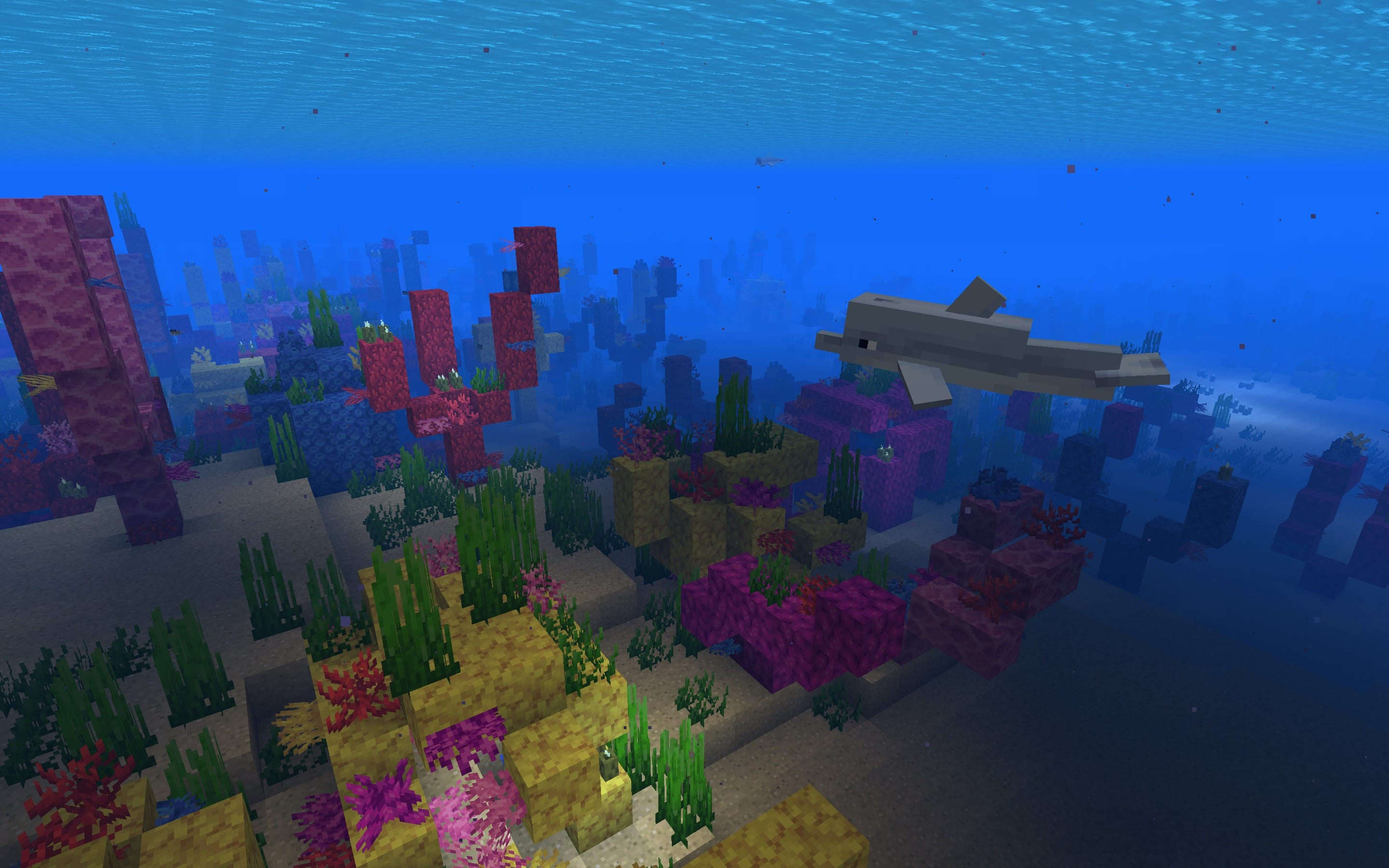 Beautiful Large Coral Reef